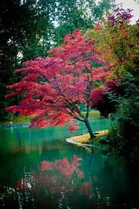 Les Plus Beaux Arbres Pour Le Jardin : les plus beaux arbres pour le jardin impressionnant ~ Premium-room.com Idées de Décoration