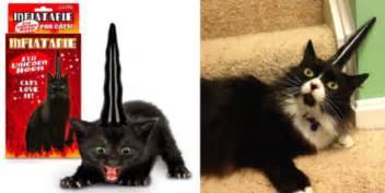 stupid cat 8 stupid cat gifts i cat