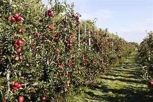 Apfelbaum Für Balkon : apfelbaum abst tzen so st tzen sie schwere ste ~ Michelbontemps.com Haus und Dekorationen