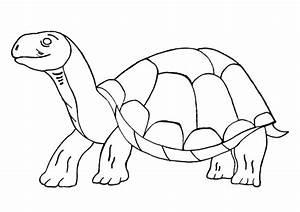 Große Reptilien Für Zuhause : gro e alte schildkr te nadines ausmalbilder ~ Lizthompson.info Haus und Dekorationen