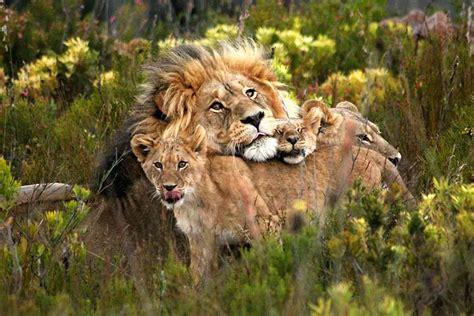 Wildlife Safaris Western Cape George South Africa