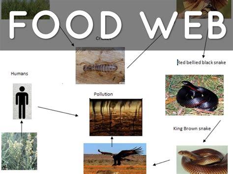 cuisine web frilled neck lizard
