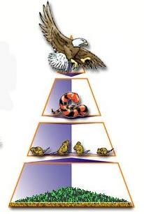 energy pyramid cliparts   clip art