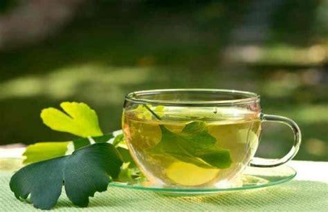 ginkgo biloba tea  leaves easy