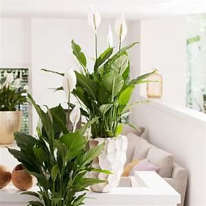 fur eine gesunde atmosphare garten center meier With whirlpool garten mit robuste zimmerpflanzen groß