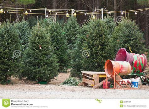 christmas tree lot stock image image  christmas