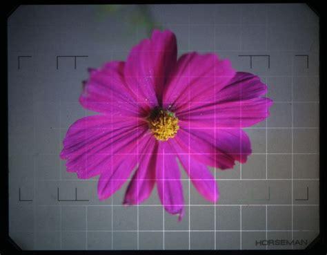 fleurs dans une chambre une ée photo une fleur dans une chambre