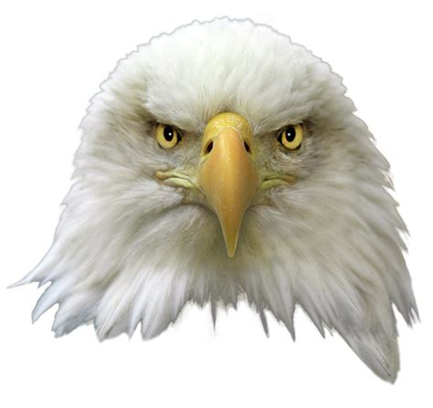 eagle head png image png arts