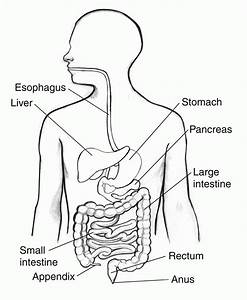 digestive system coloring page coloring home With schematics sinecan 5