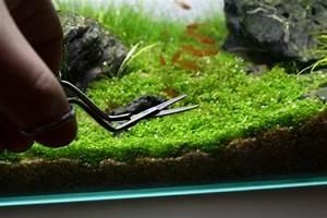 Süßwasserfische Fürs Aquarium : die 25 besten ideen zu aquarium einrichten auf pinterest ~ Lizthompson.info Haus und Dekorationen