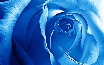 Rose Wallpapers Wide Desktop Flowers Pixelstalk Nature