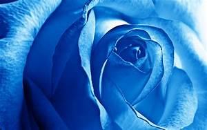 Blue Rose Wallpaper HD | PixelsTalk.Net  Blue