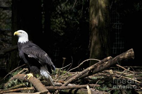 eagle s eyrie photograph by sean griffin