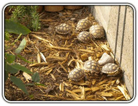 Sulcata Tortoise Bedding by Sulcata Tortoise