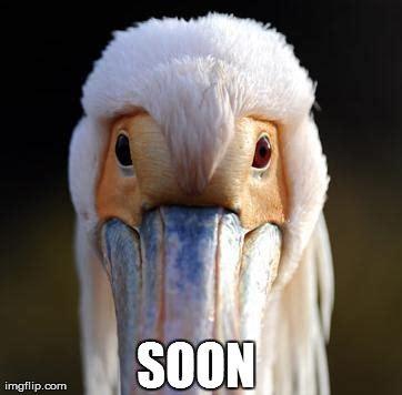 Soon Meme Generator - image tagged in animals soon memes imgflip
