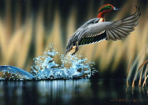 ethics  wildlife photography  filmmaking aisfm blog
