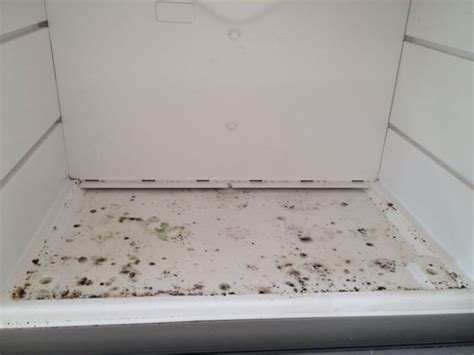 Quick Trick  Remove  Trace  Black Mold Spore