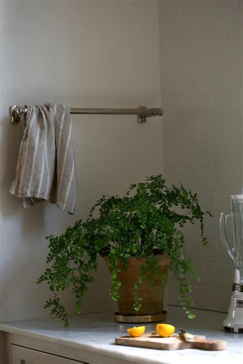 Zimmerpflanze Die Wenig Licht Braucht by 7 Pflegeleichte Zimmerpflanzen Die Wenig Licht Brauchen