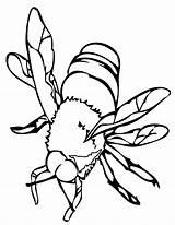 Bee Coloring Printable sketch template