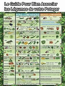 Plantes Amies Et Ennemies Au Potager : le guide pratique pour bien associer les l gumes de votre ~ Melissatoandfro.com Idées de Décoration