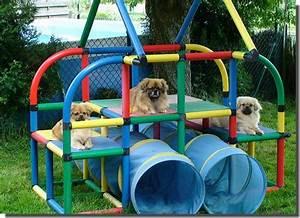 Backyard dog playground photo 6 design your home for Dog play equipment