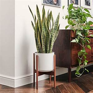 Best, House, Plants, For, Low, Light, Clean, Air, Bathrooms, And, Easy, Care, U2013, Our, Top, Plant, Picks