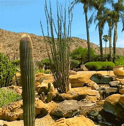 Triple Whammy Palms Speechless Sunday Ocotillo Saguaro