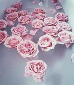 vintage pink roses | Tumblr