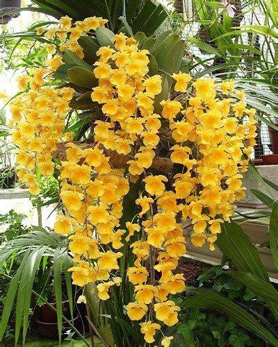 รวมดอกไม้ในไทย ๘๙ ชนิด   การปลูกพืช