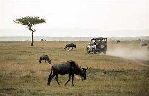 Things To Know About African Safari Tours