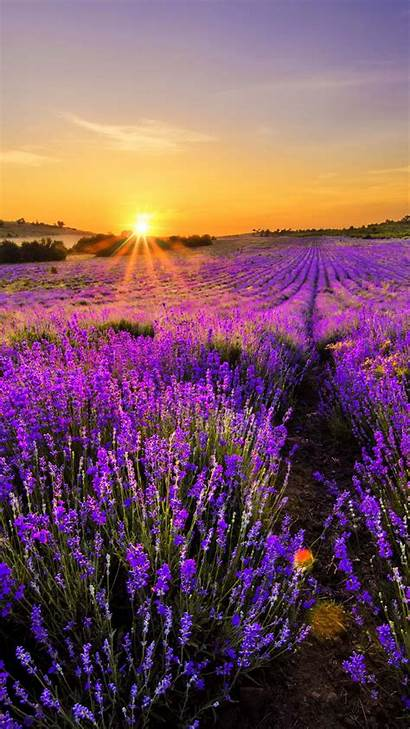 Iphone Nature Landscape Lavender