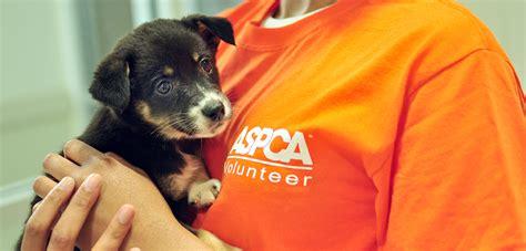 volunteer   aspca adoption center aspca