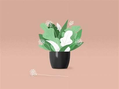 Plants Plant Animation Animated Illustration Dribbble Gifs