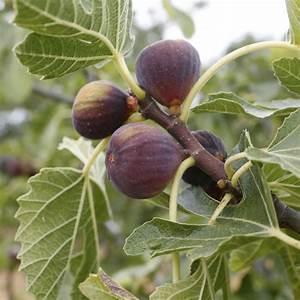 Arbre A Fruit : arbre de jardin liste ooreka ~ Melissatoandfro.com Idées de Décoration