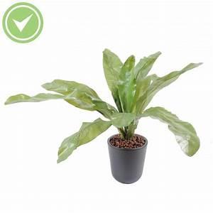 Plante D Intérieur Haute : plante verte haute ~ Premium-room.com Idées de Décoration