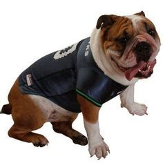 seahawks  dog images seahawks seattle