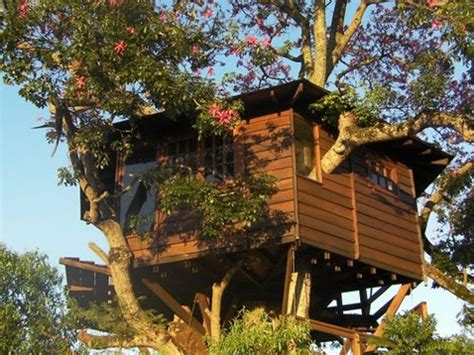 tree in house design tree house designs the dream house of all kids the ark