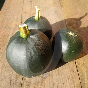 Seed Sprouting Chart Squash Rolet F1 Seeds Quality Seeds From Sow Seeds Ltd