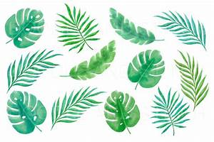 Tropical Leaf Clipart Rescuedeskme