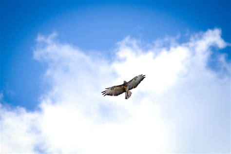 Birds Flying High Bussard By Matzell On Deviantart