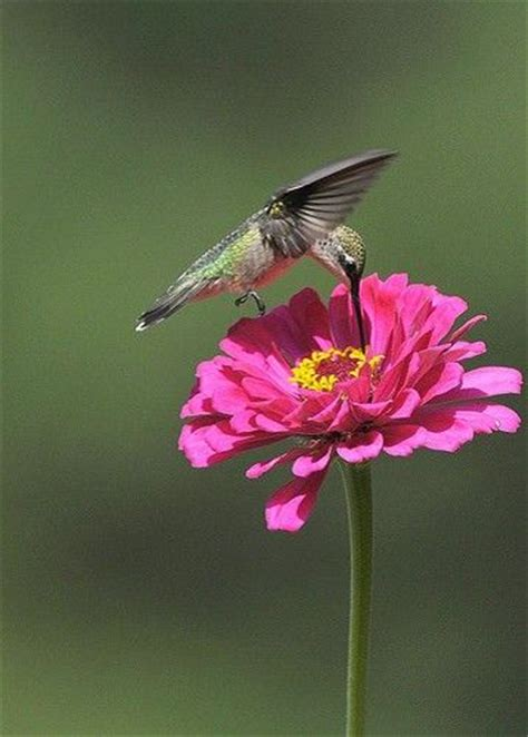 simply beautiful gods creature ruby throated hummingbird