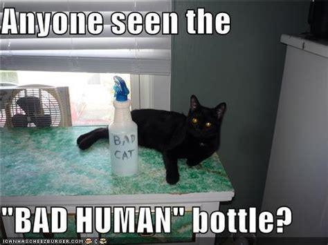 squirt bottles punishment  cat behavior