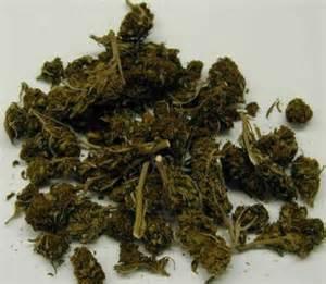 What Does Marijuana Plant Look Like