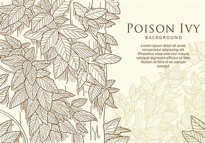 Ivy Drawn Hand Vector Leaf Poison Vectors