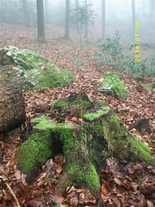 Baumhaus Bauen Ohne Baum Zu Beschädigen : familienferien im schwarzwald schwarzwald tourismus gmbh ~ Orissabook.com Haus und Dekorationen