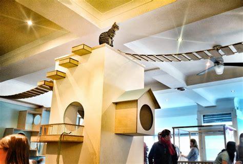 de cagne maison maison de moggy scotland s cat cafe design milk