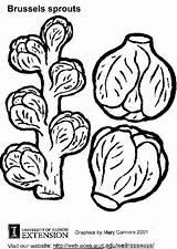 Sprouts Bruxelles Coloring Rosenkohl Chou Choux Coloriage Malvorlage Colorare Bruselas Coles Disegno Cavolini Kleurplaat Spruiten Dibujo Brussel Sprout Dessin Brussels sketch template