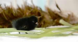 baby bird found in petaluma is no bigger than a