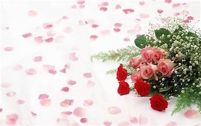 Roses Backgrounds Wallpapers Background Rose Desktop Flower