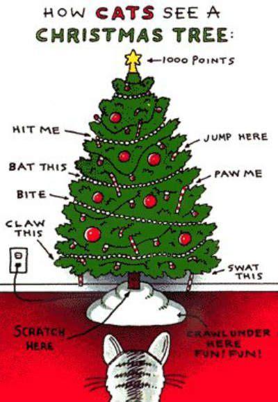 bea s book nook cat thursday christmas